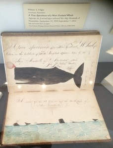 Folger's Whale from Monticello logbook 1853